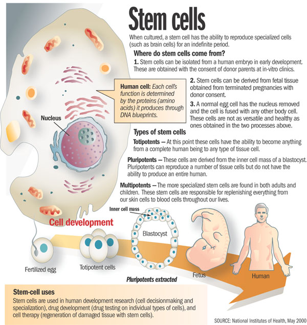 stem cell research con viewpoint Pros and cons of using stem cells  research on stem cells continues to advance knowledge about how an organism develops from a single cell and how healthy cells .